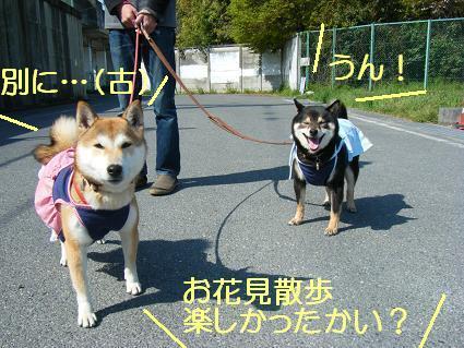 花見散歩③(04 11)3