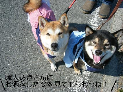 花見散歩③(04 11)5