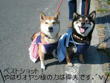 花見散歩③(04 11)7