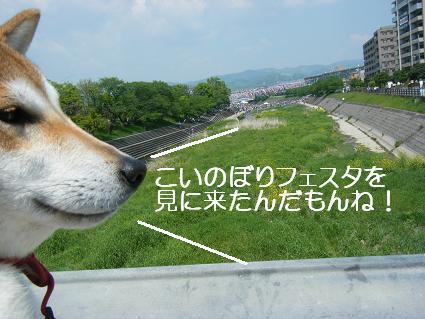 こいのぼり(04 29)1