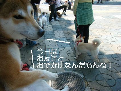 こいのぼり(04 29)