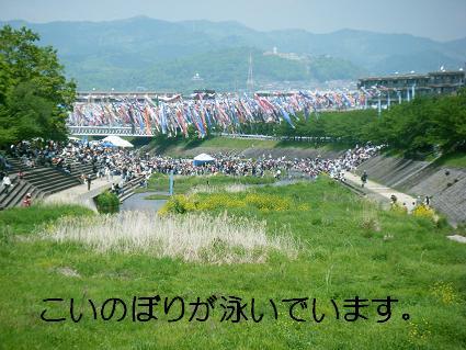 こいのぼり(04 29)2