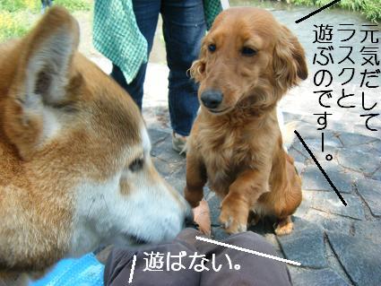 こいのぼり(04 29)6