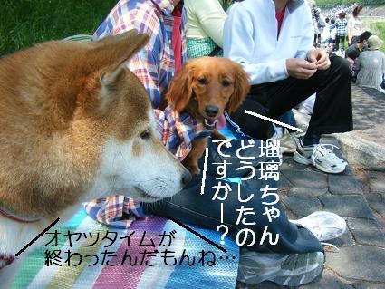 こいのぼり(04 29)5