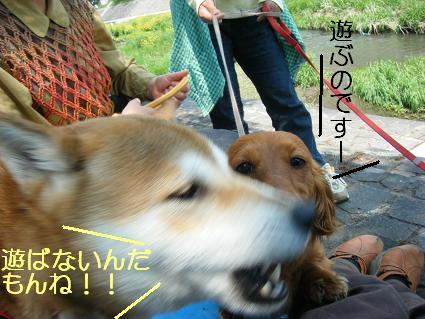 こいのぼり(04 29)7