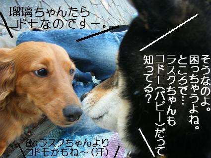 こいのぼり(04 29)8