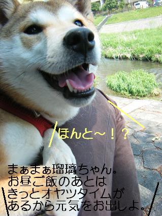 こいのぼり(04 29)9