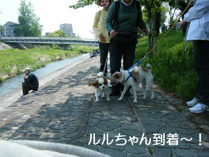 こいのぼり(04 29)11