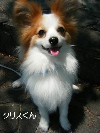 こいのぼり②(04 29)2