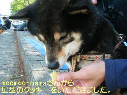 こいのぼり②(04 29)8
