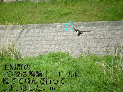 こいのぼり②(04 29)16