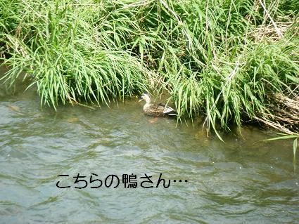 こいのぼり②(04 29)15