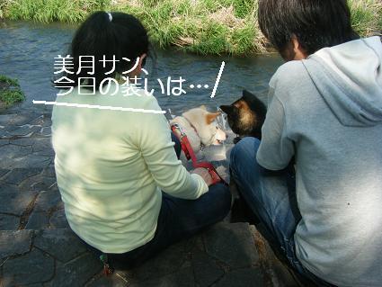 こいのぼり③(04 29)