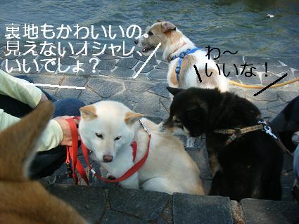 こいのぼり③(04 29)4