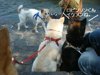こいのぼり③(04 29)5