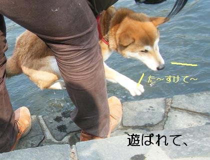 こいのぼり③(04 29)9