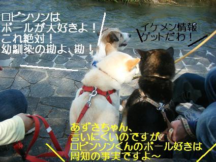 こいのぼり③(04 29)6