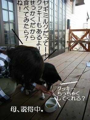 うにのしおから(05 05)20