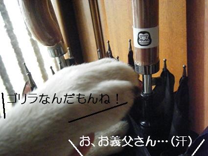 05 05ほらゴリラ1