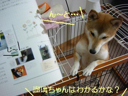 Maruちゃんだ(05 31)3