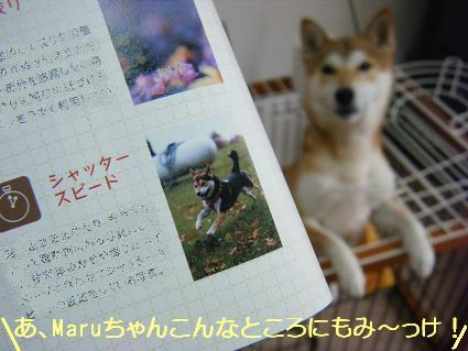 Maruちゃんだ(05 31)5