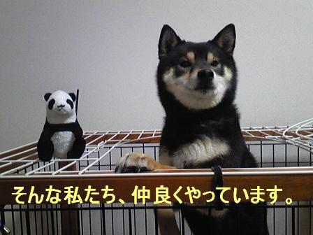 ぱんだちゃん(04 01)6
