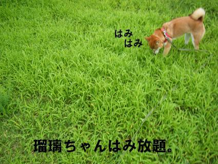 朝さんぽ0908145
