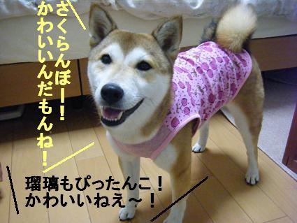 お洋服ありがとう!2