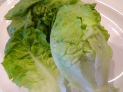 015_lettuce.jpg