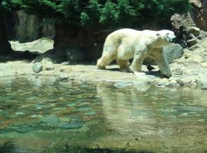 024_zoo.jpg