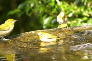 078_bird.jpg