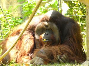 161_zoo.jpg