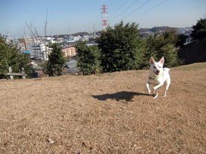 走るピクシィ2