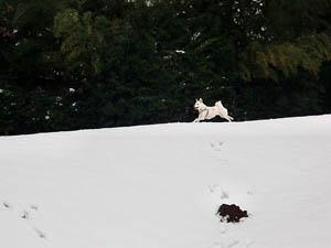 雪の中走る~