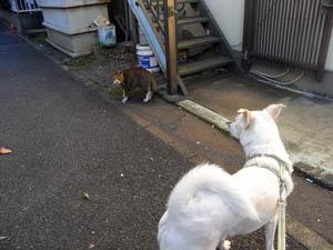 猫さんに遭遇
