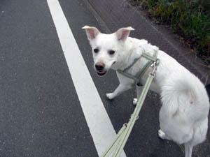 笑顔で朝散歩