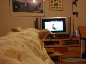 ソファーからテレビ鑑賞