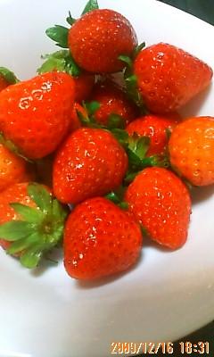 初イチゴ2