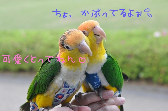 DSC_0040_20110508_162218.jpg