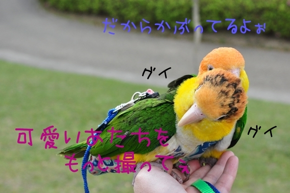 DSC_0119_20110508_163640.jpg