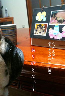 091124bunta_10.jpg