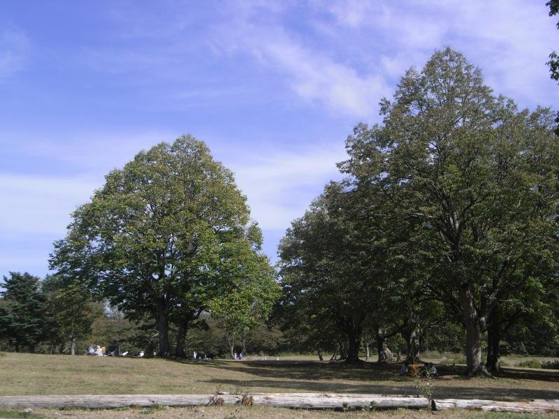 091001-6.jpg