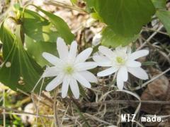 野草の花100505