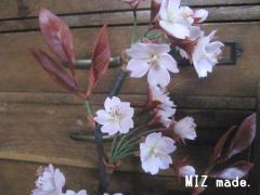 桜完成アップ
