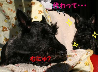 a_20081126164719.jpg