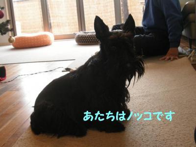a_20081213212054.jpg