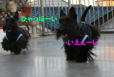 a_20090114174553.jpg