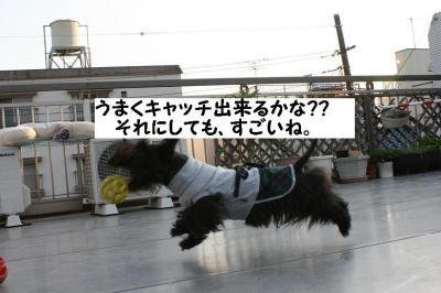a_20090312203209.jpg