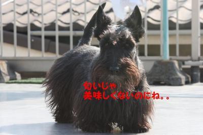 a_20090406214930.jpg