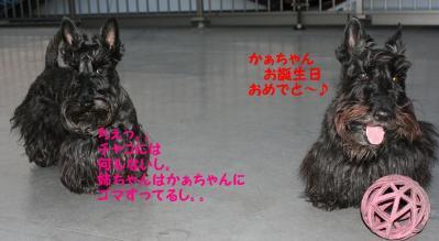 a_20090409222316.jpg